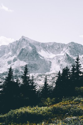 Plakat Ośnieżone góry ponad lasem