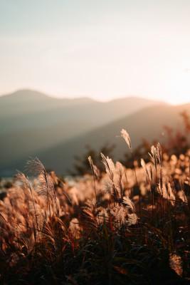 Plakat Trawy przy zachodzie słońca