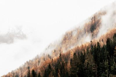 Plakat Świerkowy las we mgle