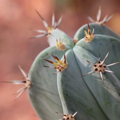 Plakat Kaktus makro