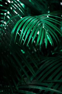 Plakat liście palmy