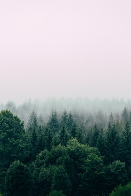 Plakat Mgła nad lasem
