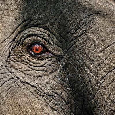 Plakat Oko słonia