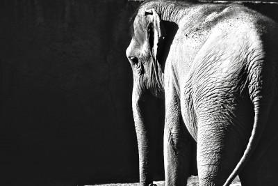 Plakat Słoniątko