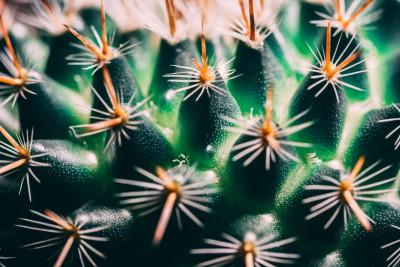 Plakat Zielony kaktus